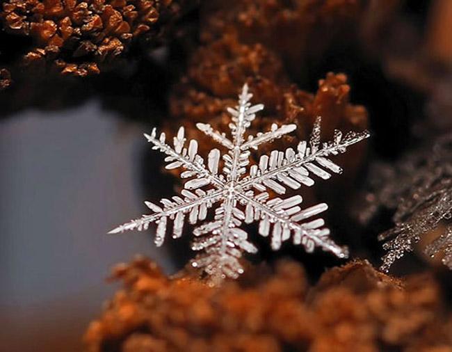 Macro Snowflakes Andrew Osokin